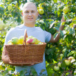 Guy with basket of harvested apples - Stock Photo