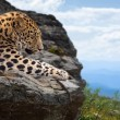 Leopard  on stones - Stock Photo