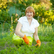 Woman working in  vegetable garden - Stock Photo