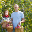 Happy  couple  with apple harvest   — Stock Photo