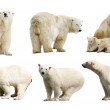 Set of polar bears. Isolated over white — Stock Photo
