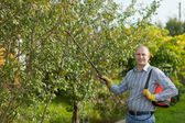 Man with garden spray in orchard — Stock Photo