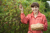 Woman picking brier — Stock Photo