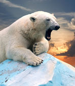 Polar bear against sunset — Zdjęcie stockowe