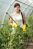 Female gardener working in greenhouse — Stock Photo