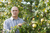 Man in surrounded by apple trees — Stock Photo