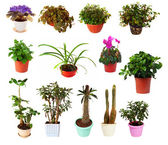 Set of houseplant in pots — Stock Photo