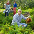Happy family harvesting carrots — Stock Photo