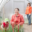 Family works in greenhouse — Stock Photo #23477867