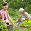 Women working in vegetable garden — Stock Photo #23478081