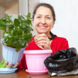 Foto Stock: Mature woman transplants potted flower