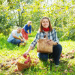 family picks apples in  orchard — Stock Photo