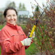 Mature woman pruning bush - Stock Photo