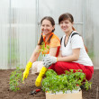 Stock Photo: Women planting tomato spouts