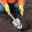 Stock Photo: Gardener resetting tree in soil