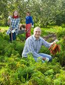 Happy family harvesting carrots — Stock Photo