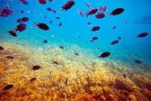 热带珊瑚礁海域鱼类 — 图库照片