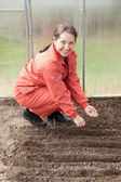 Woman sows seeds in soil at hothouse — Stock Photo