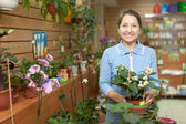 Mature woman chooses Clerodendrum plant — Stock Photo