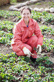 Woman loosen the strawberries in spring — Stock Photo