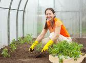 Woman planting tomato seedling — Stock Photo