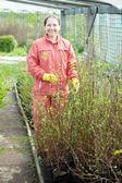 Maure woman chooses bush sprouts — Stock Photo
