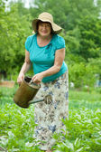 Mature woman watering potato plant — Stock Photo