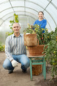 Man and woman in tomato plant — Stock Photo