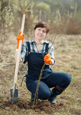 Female farmer planting shrubbery — Stock Photo