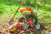 Harvested vegetables — Stockfoto