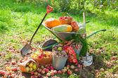 収穫した野菜 — ストック写真