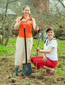 Female gardeners planting tree — ストック写真