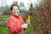 Mature woman pruning bush — Stock Photo