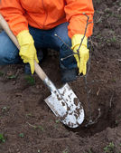 Gardener resetting tree in soil — Stockfoto