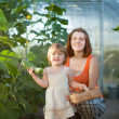 Royalty-Free Stock Photo: woman and baby girl with cucumbers in hothouse