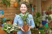 Woman chooses ficus plant (Bonsai) — Stock Photo