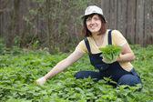 Woman gathers nettle — Stock Photo