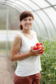 Woman with harvested tomato — Stock Photo