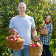 Man and woman picks apples — Stock Photo #24183233