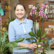 Stock Photo: Womchooses Phalaenopsis at flower shop