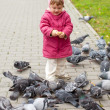 Two-year girl feeding pigeons - Stock Photo