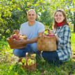 Happy  couple  with apple harvest - Stock Photo
