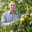Man surrounded by  apple trees - Stock Photo