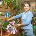 Female florist with Kalanchoe — Stock Photo