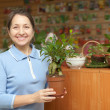 Stock Photo: Mature womwith ficus plant (Bonsai)