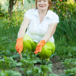 Mature woman working in field — Stock Photo