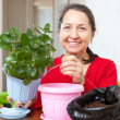 Stockfoto: Mature womtransplants potted flower