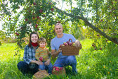 Happy family with harvested apples — Stock Photo