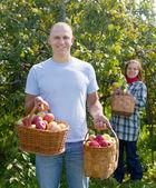 Homme et femme picks pommes — Photo