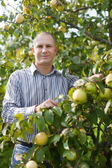 Man surrounded by apple trees — Stock Photo